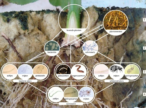 bodemvoedselweb agroxpertus